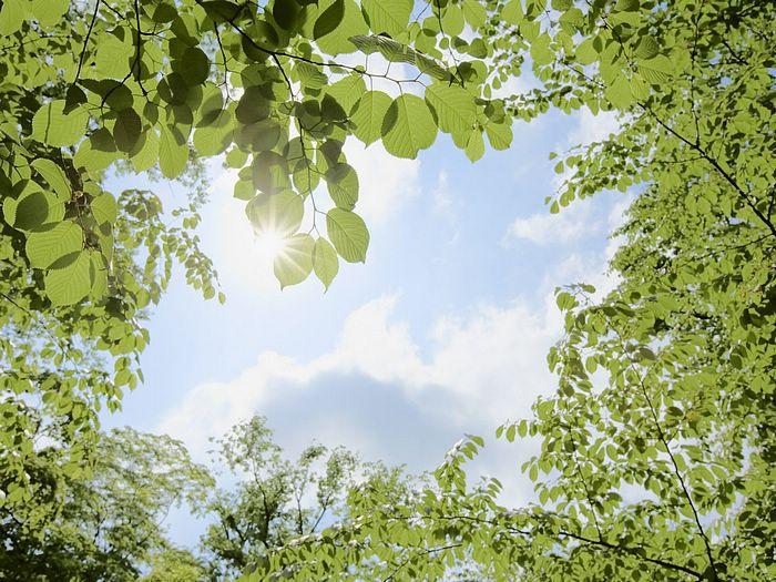 Summer_trees_and_sunshine_sky_JA130_photo