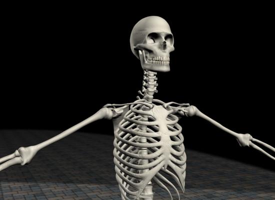 skeleton0020