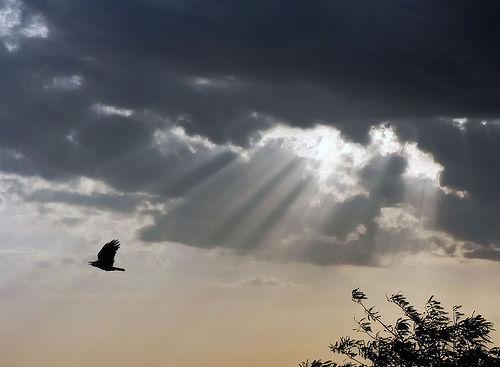 storm-bird